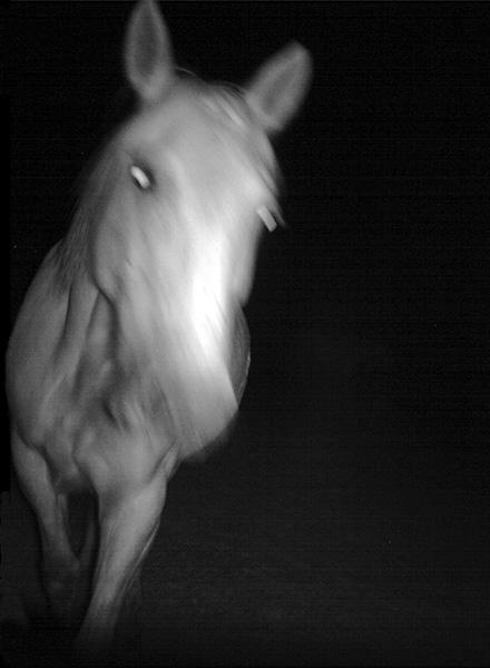 HorsesareGhosts