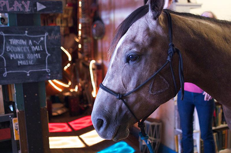 17_HorseDream_GusAbsorbs_Mitch